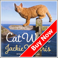 cat-walk-jackie-morris-book-buy-Graffeg