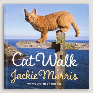 <center>CAT WALK<h4>– Book by  Jackie Morris –</h4></center>